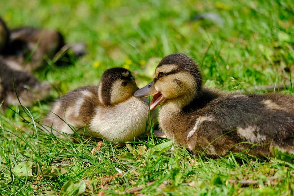 Top Things You Did Know About Baby Birds