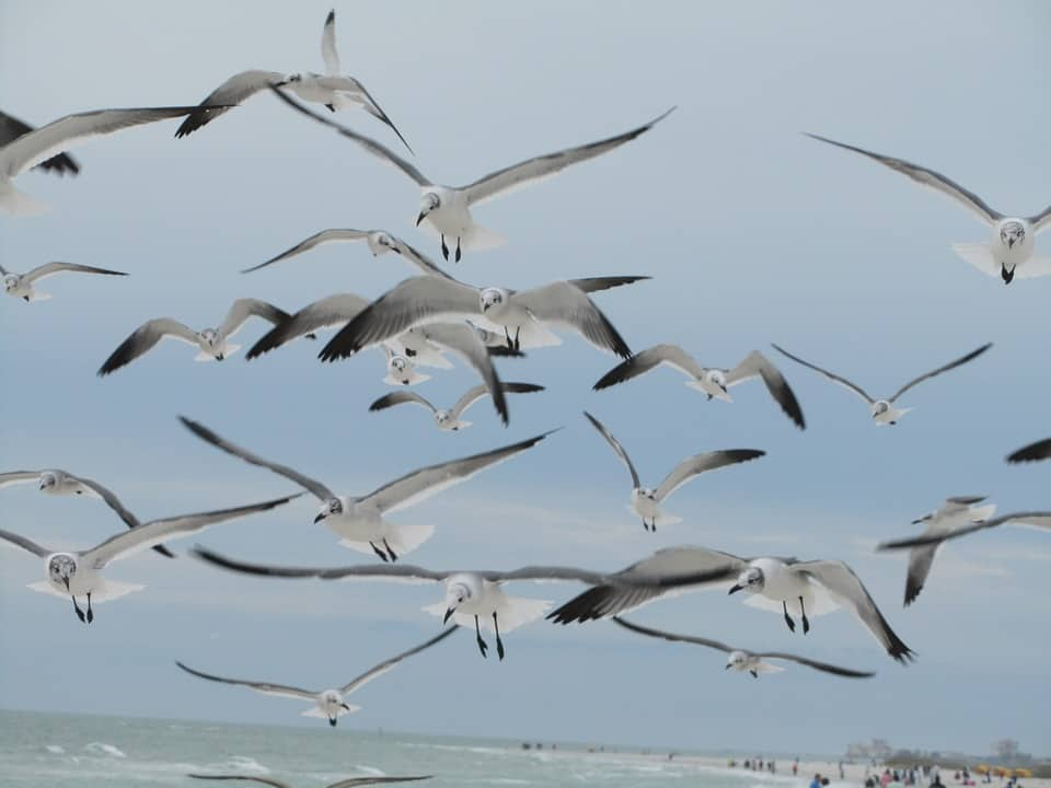 Common Bird Migration Patterns