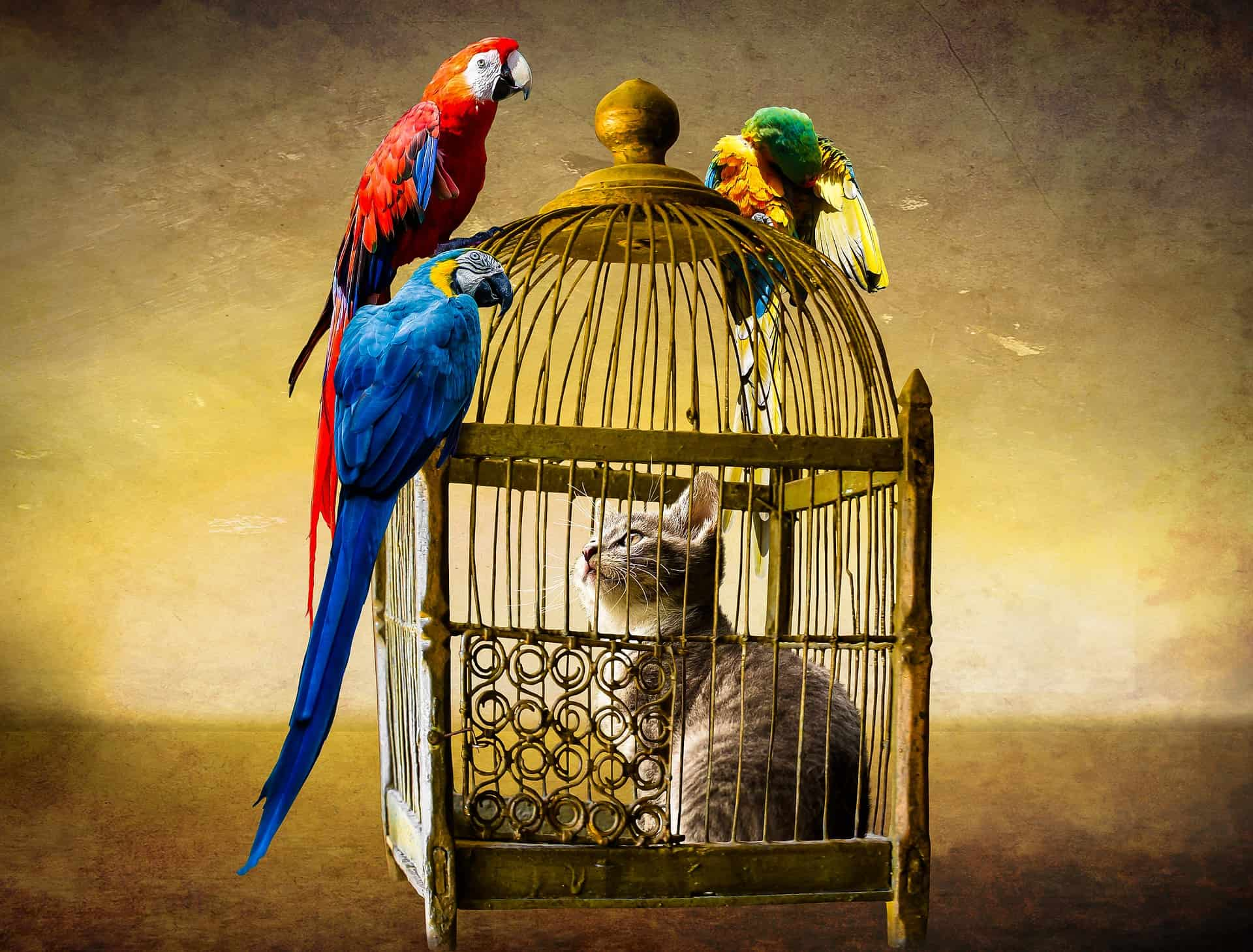 Tips To Be Followed While Bird Watching