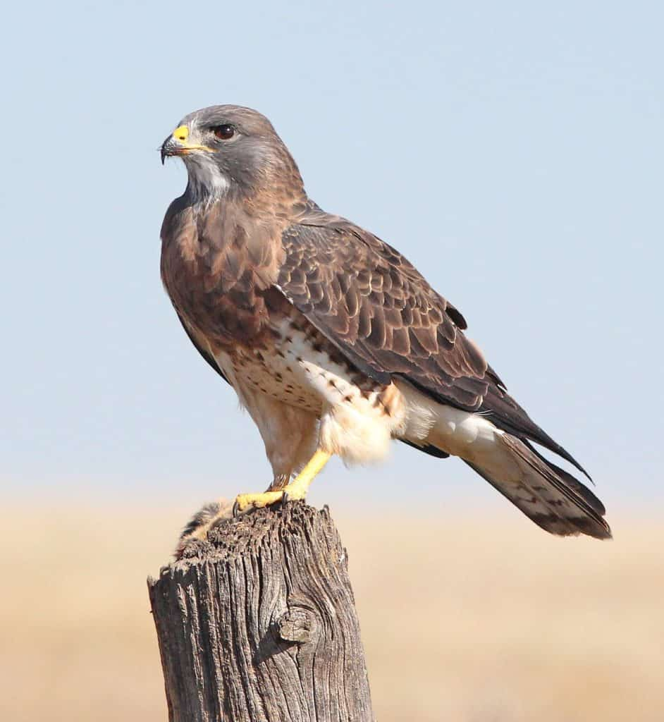 What Are Some Of The Benefits Of Bird Watching Hobby?
