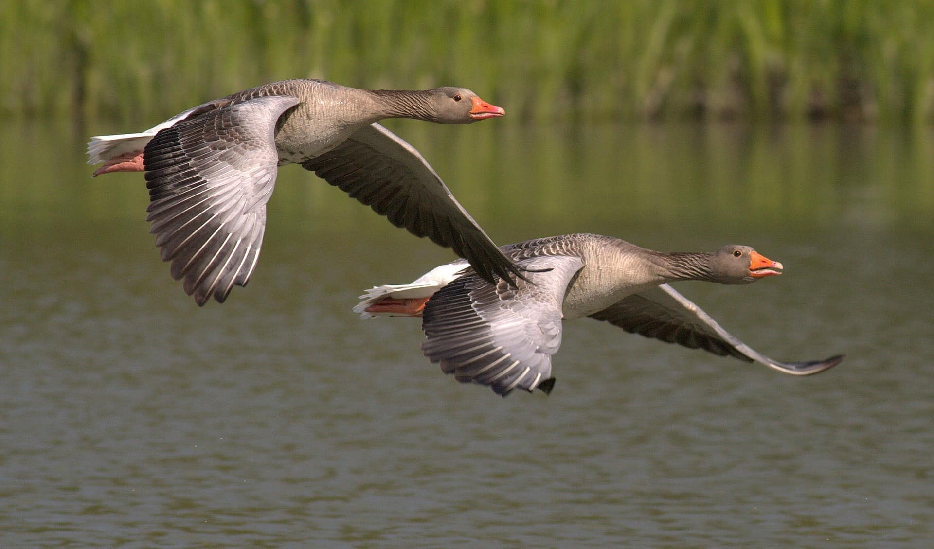 All You Wanted To Know About Migratory Birds