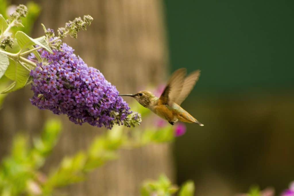 Facts You Should Know About Hummingbirds
