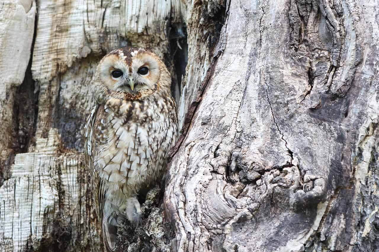 Wild Birds: Meaning and Examples