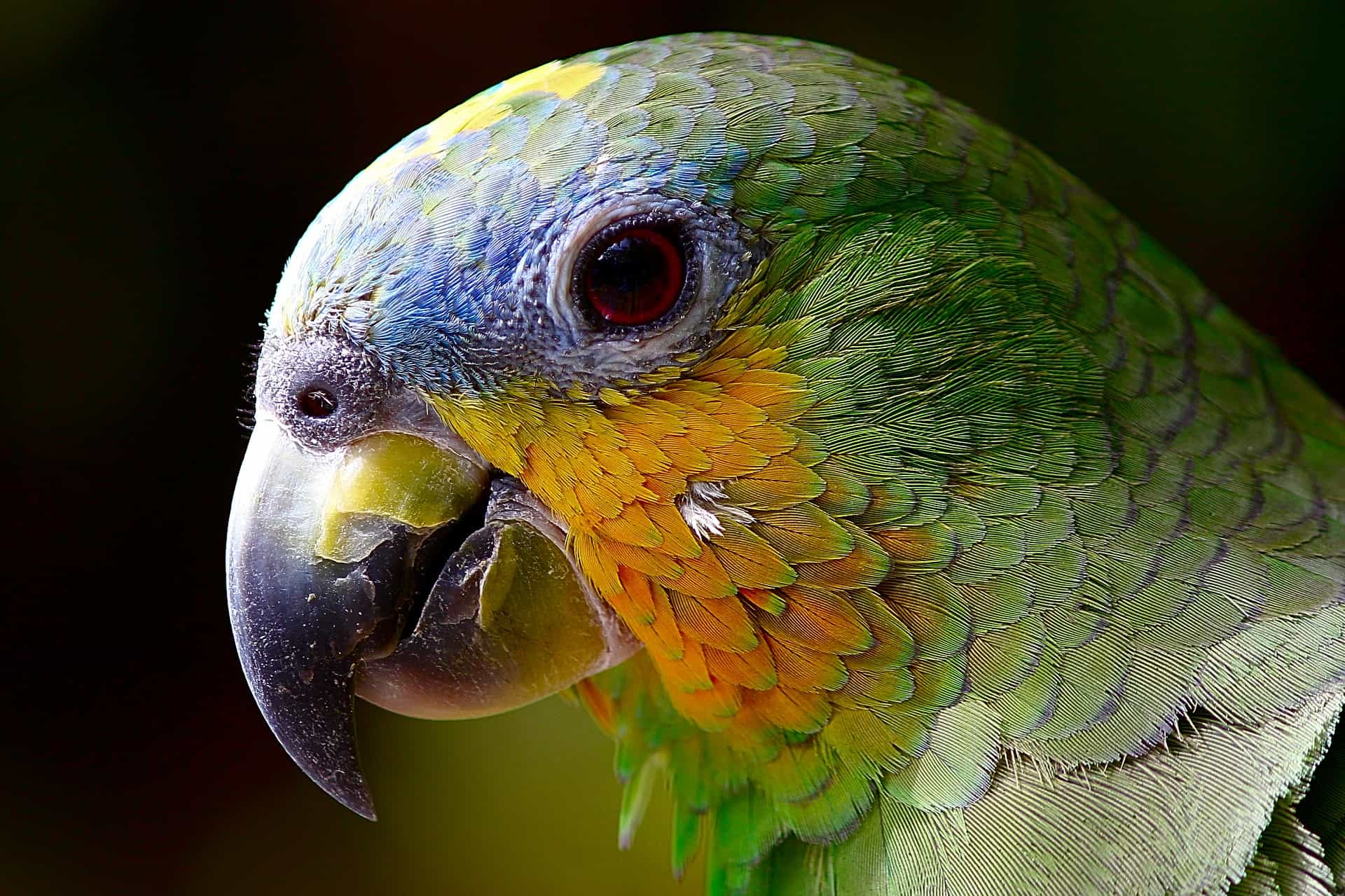 All You Need To Know About Parrot As A Pet Bird.