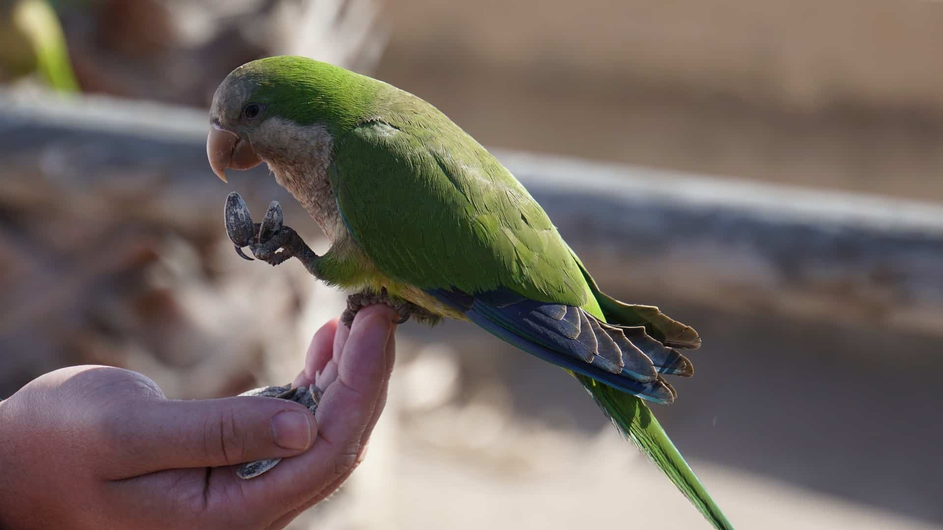 Types of Parrots That You Should Own As Pets
