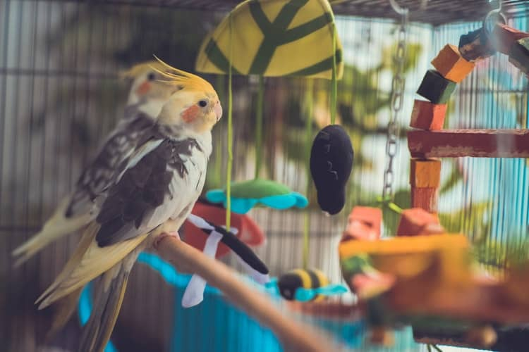 Have Your Pet Bird The Feeling Of Nature With These Cute Bird Swings