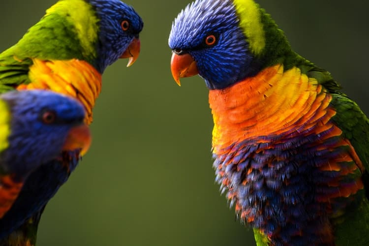 Vivid Species Of Macaw In The World