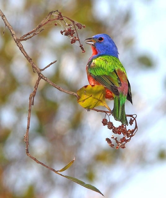 Top 15 Most Popular Bird Species in North America