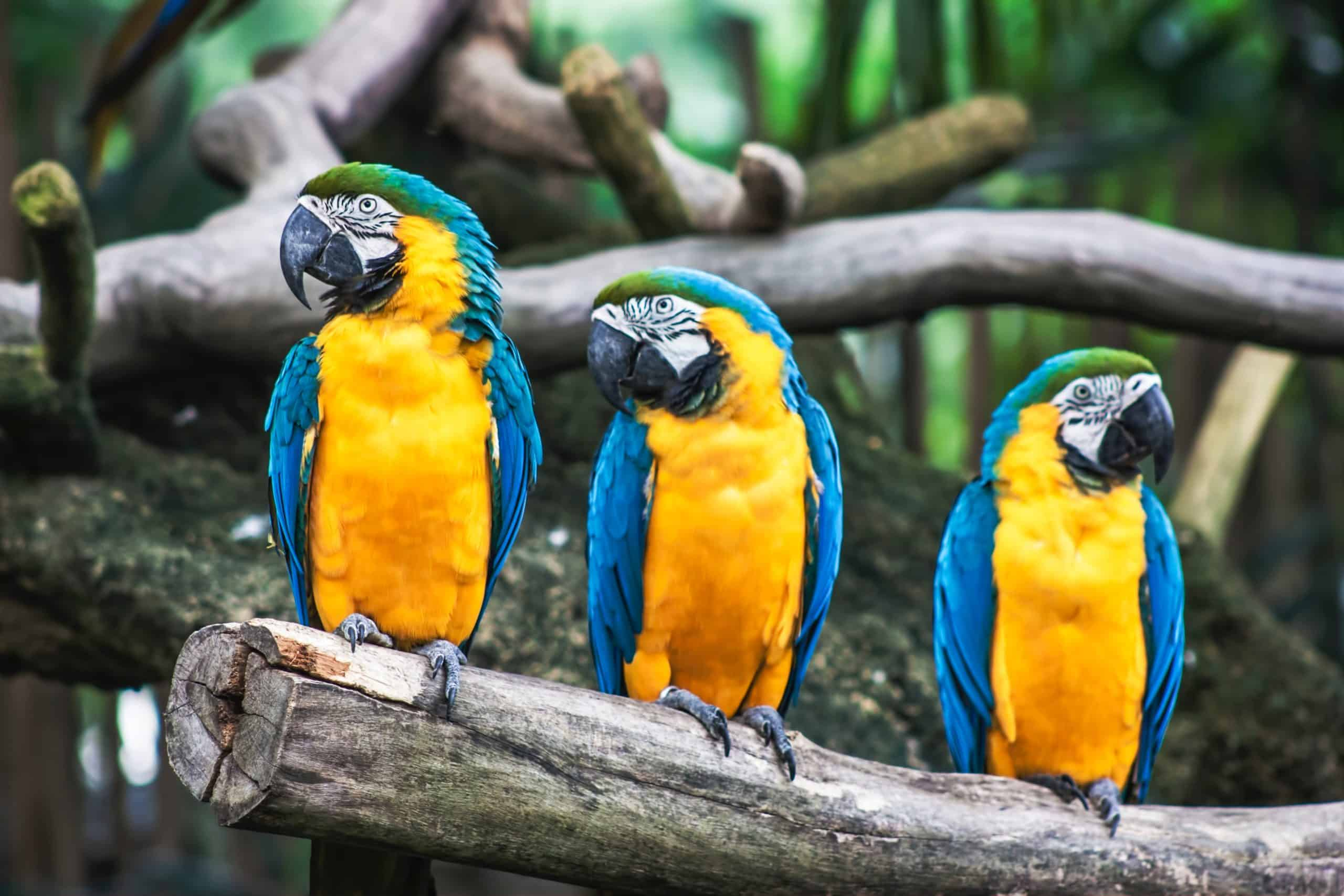 Different Types Of Birds You Should Know About