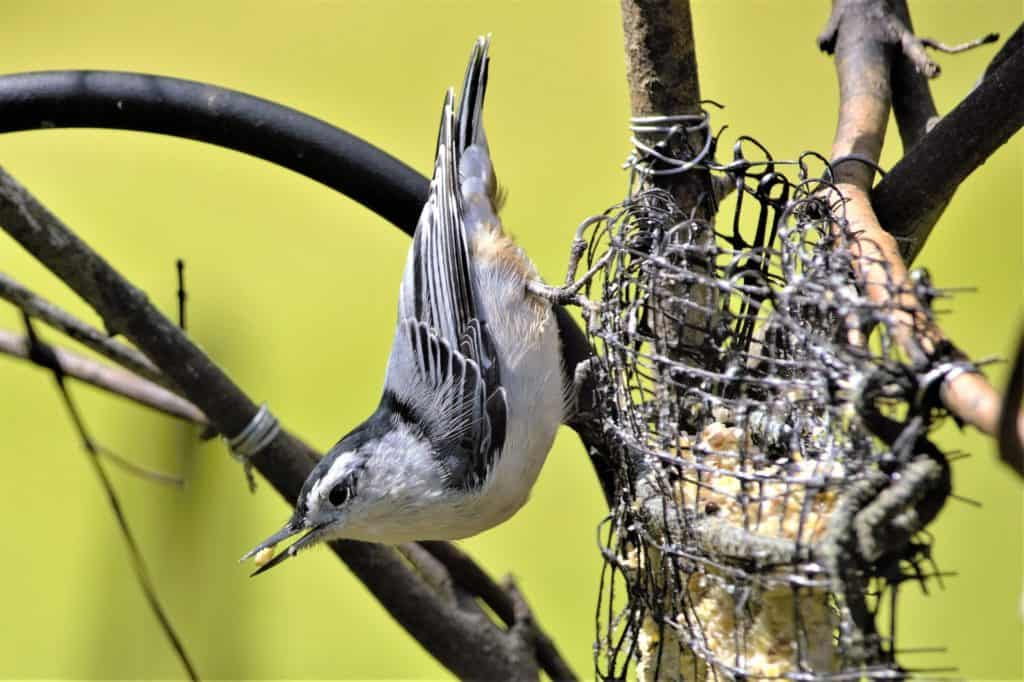 Some Amazing Bird Information That Can Excite Kids