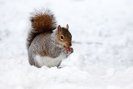 How Birds Let Squirrels_Know When It's Safe To Relax