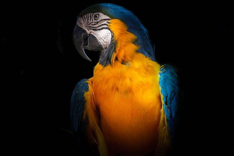 Facts About Parrots - One Of The Most Colorful Birds