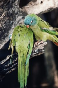 Chonky Ancient Bird Is World's Largest Known Parrot