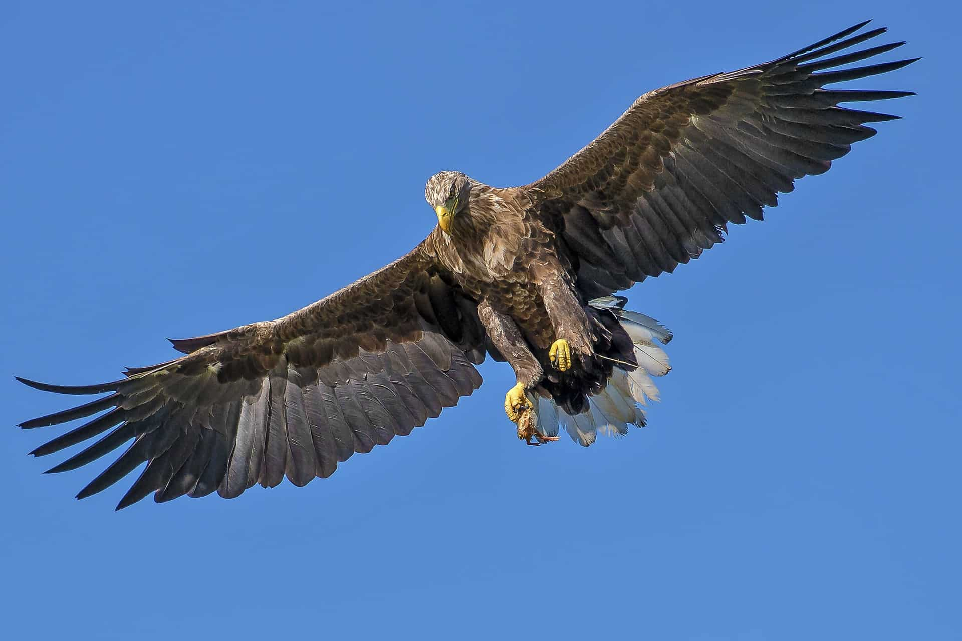Birds Prey Types And How They Hunt