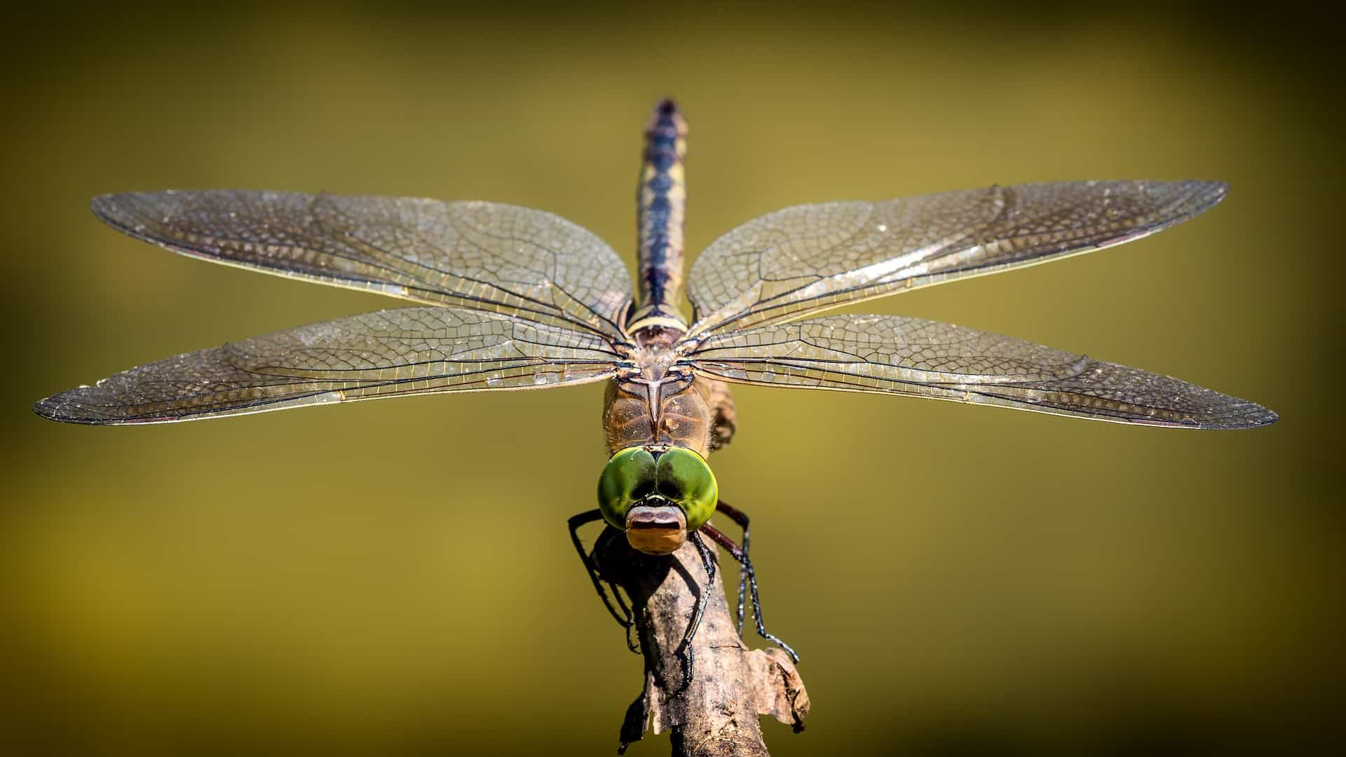 The Origin Of Wings: An Article On Insect Evolution
