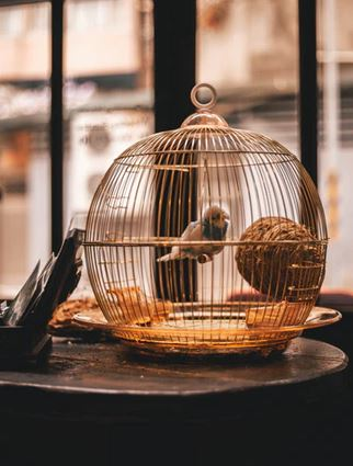 Bird Cage: Items To Make Bird Cage Maintenance Easier