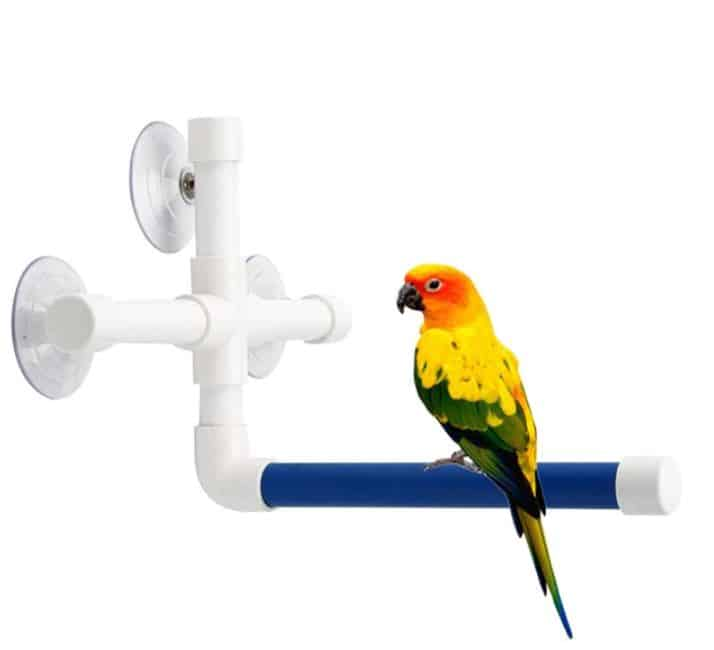 Bathing Your Pet Bird – Essential Things To Keep In Mind