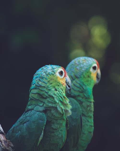 Food Wasting By Parrots - All You Need To Know