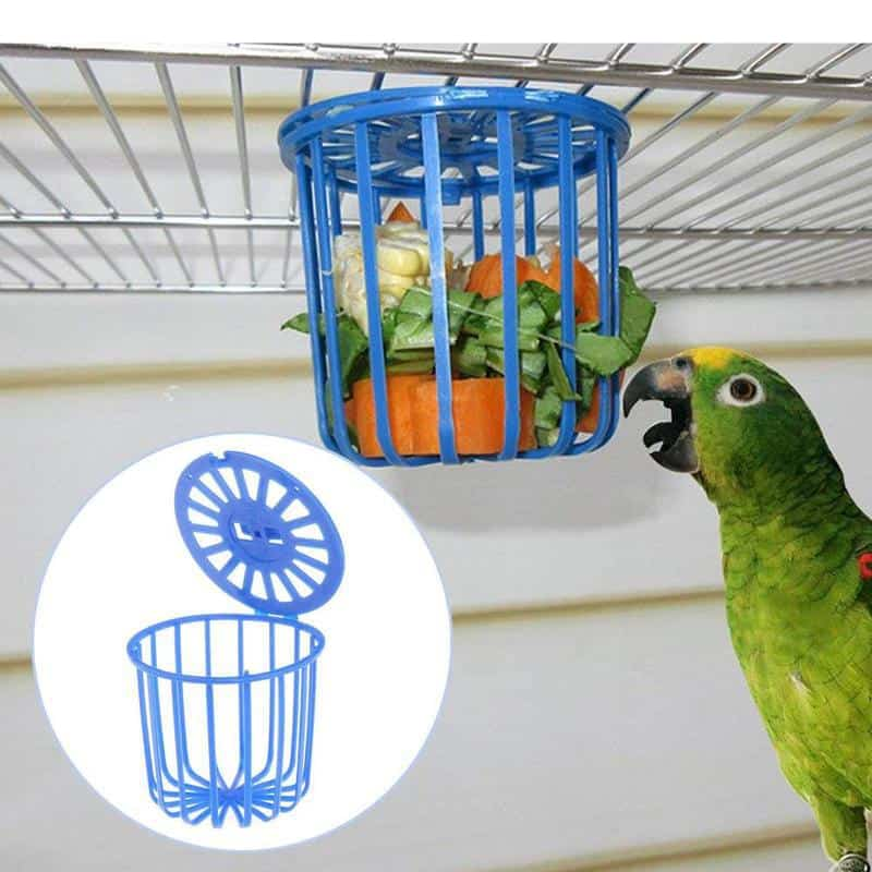 What Do Parrots Eat – Know About The Perfect Diet For A Parrot