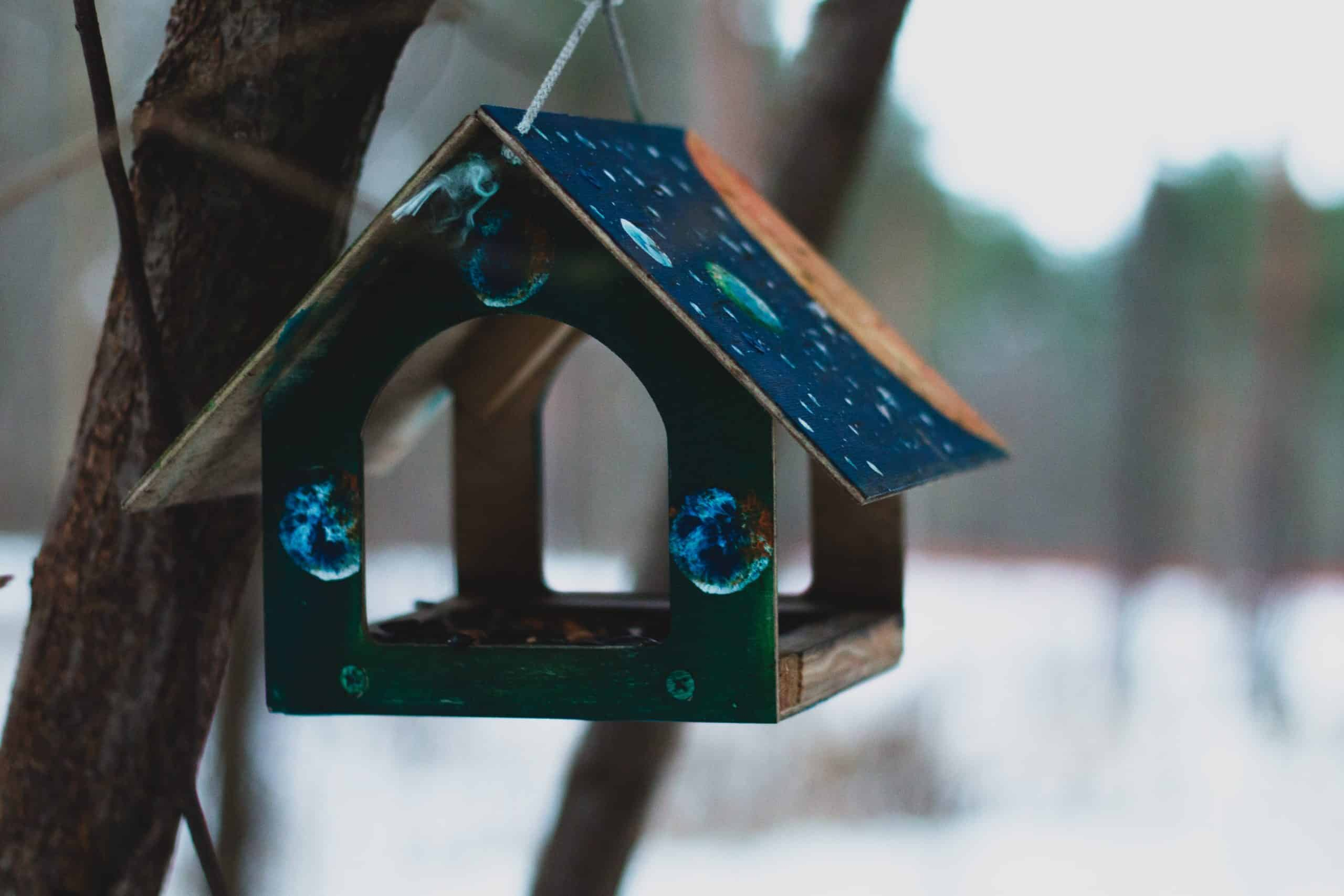 Help Wildlife With These Amazing Bird Feeders