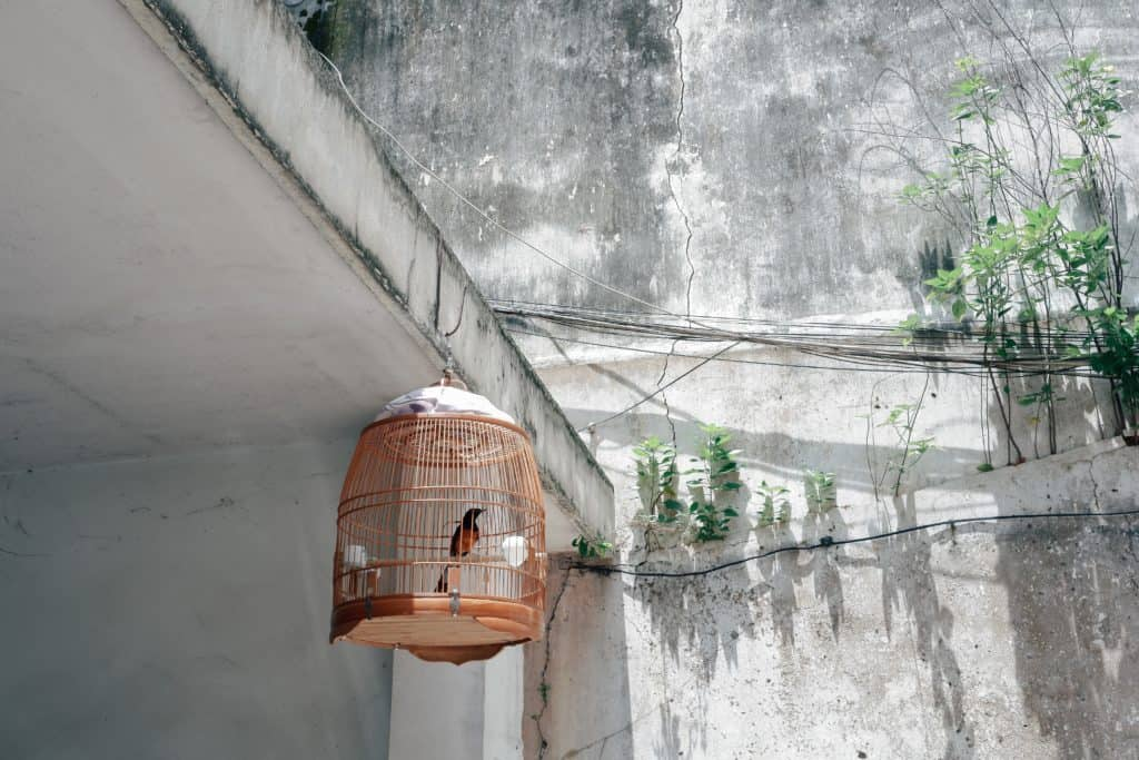 Bird Cage Items To Make Bird Cage Maintenance Easier