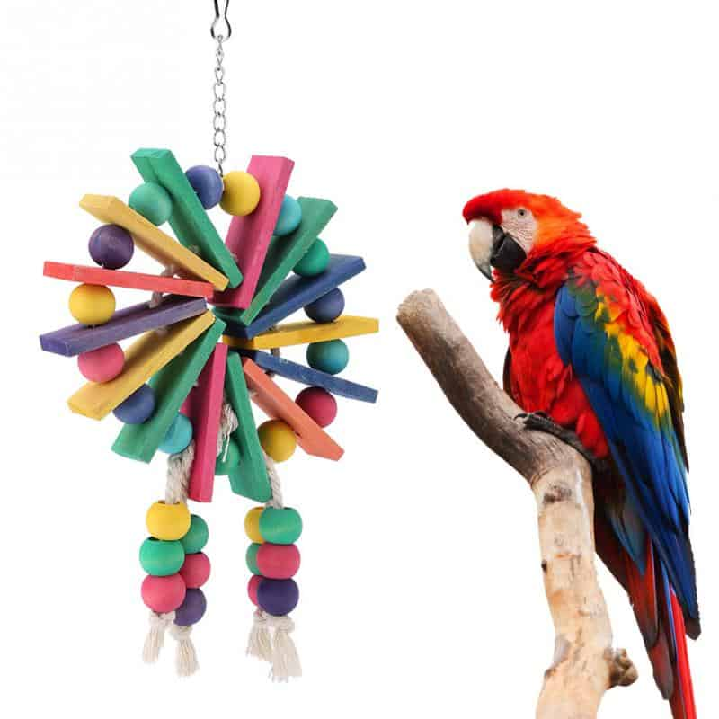 Top 10 Products For Your Bird: Take Good Care Of Your Feathery Friend