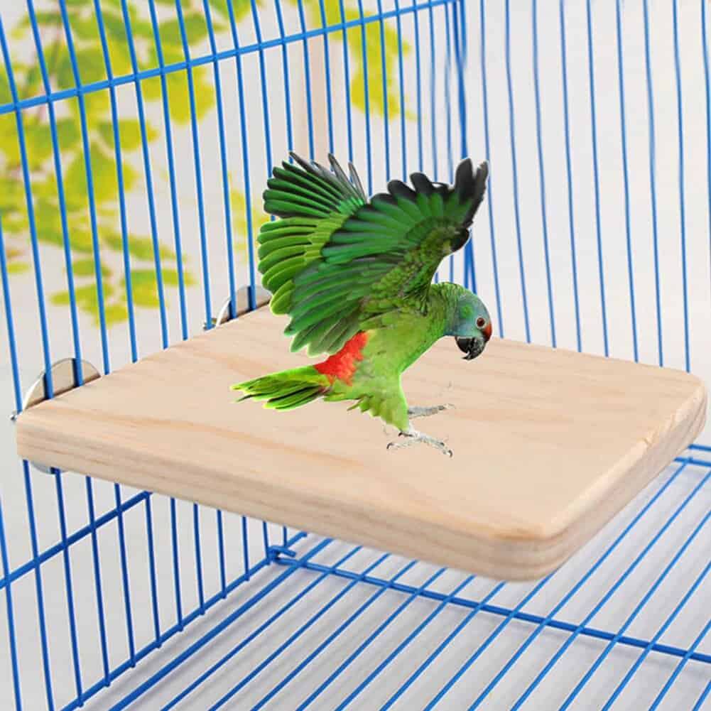 Parrot Is Loved As A Pet All Around The World