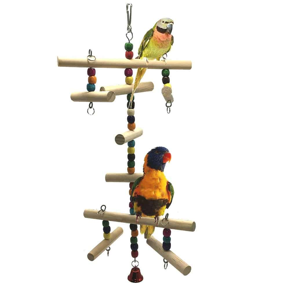Be A Part Of Parrot's Life- How To Pet Parrots And Their Health