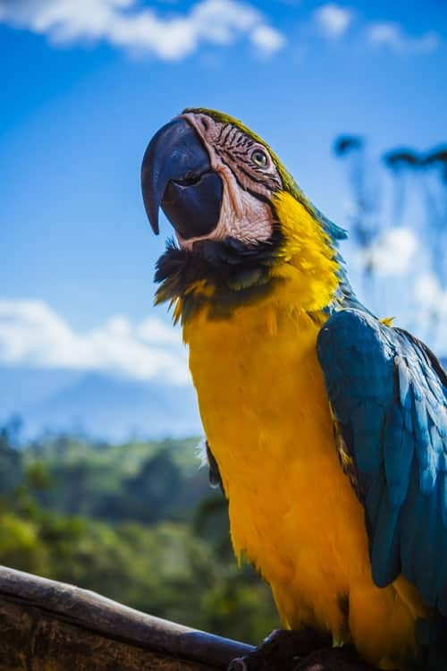 Vivid Species: Do You Know About The Macaw Species?