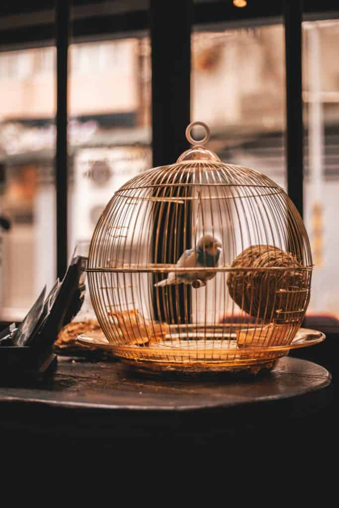 Select The Right Bird Cage For Your Pet