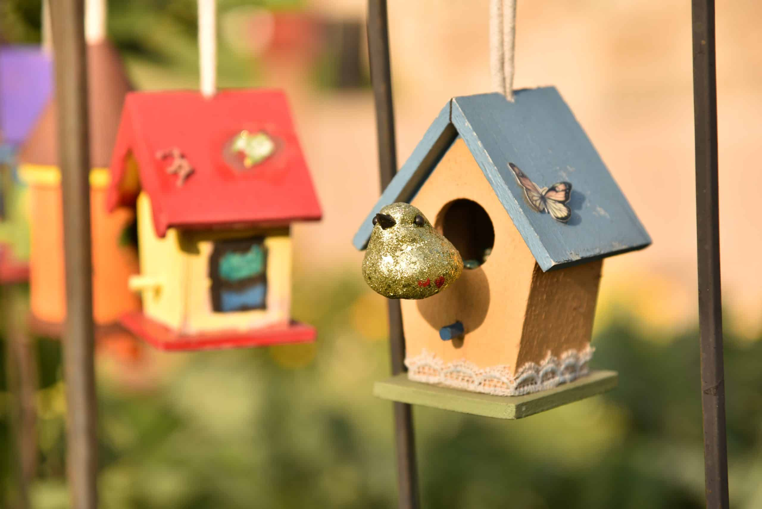 Toys For Birds: Getting The Best