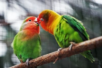 Attractive Pet Birds: The Top 4 Pet Birds