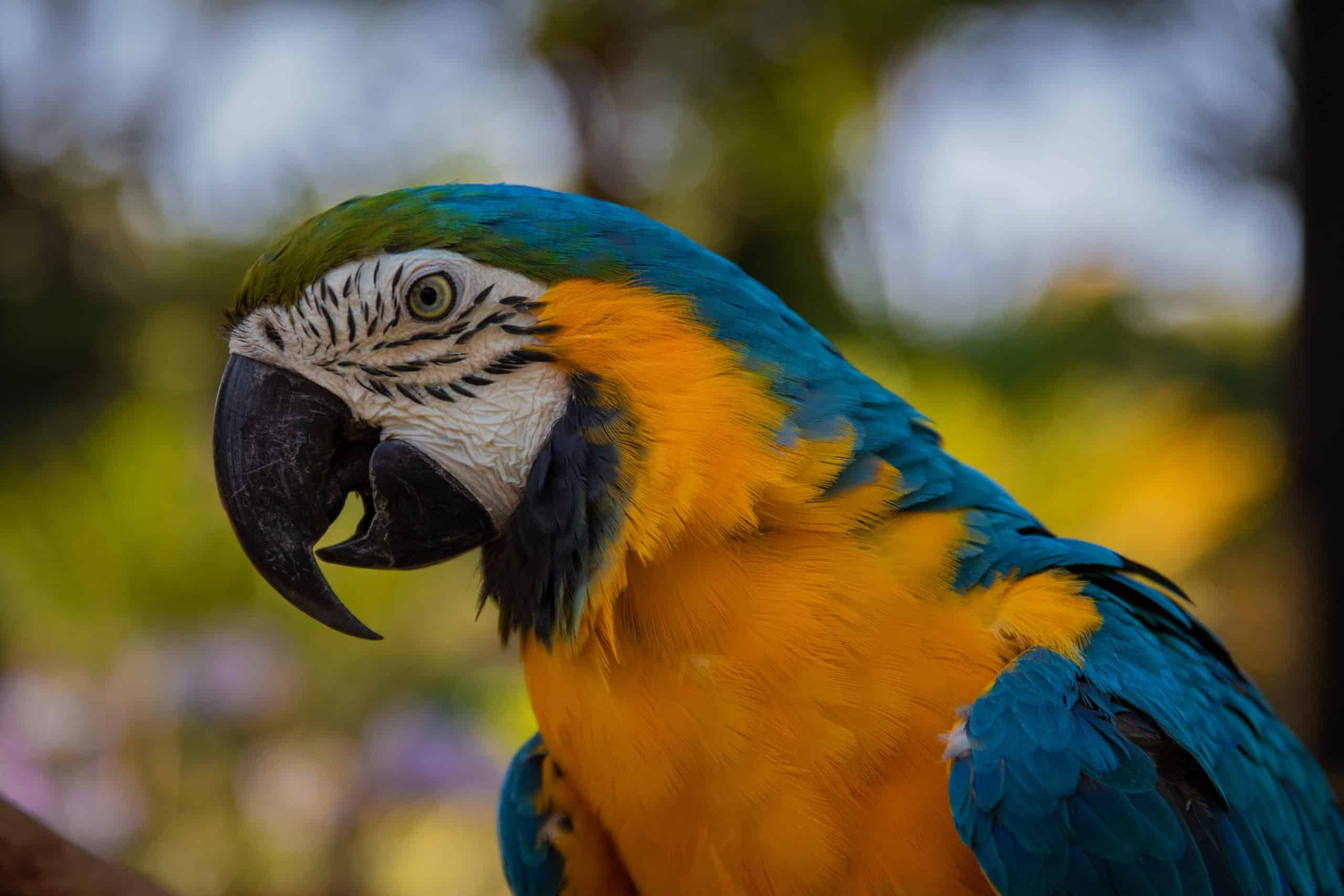 Popular Bird Species That You Should See Once!