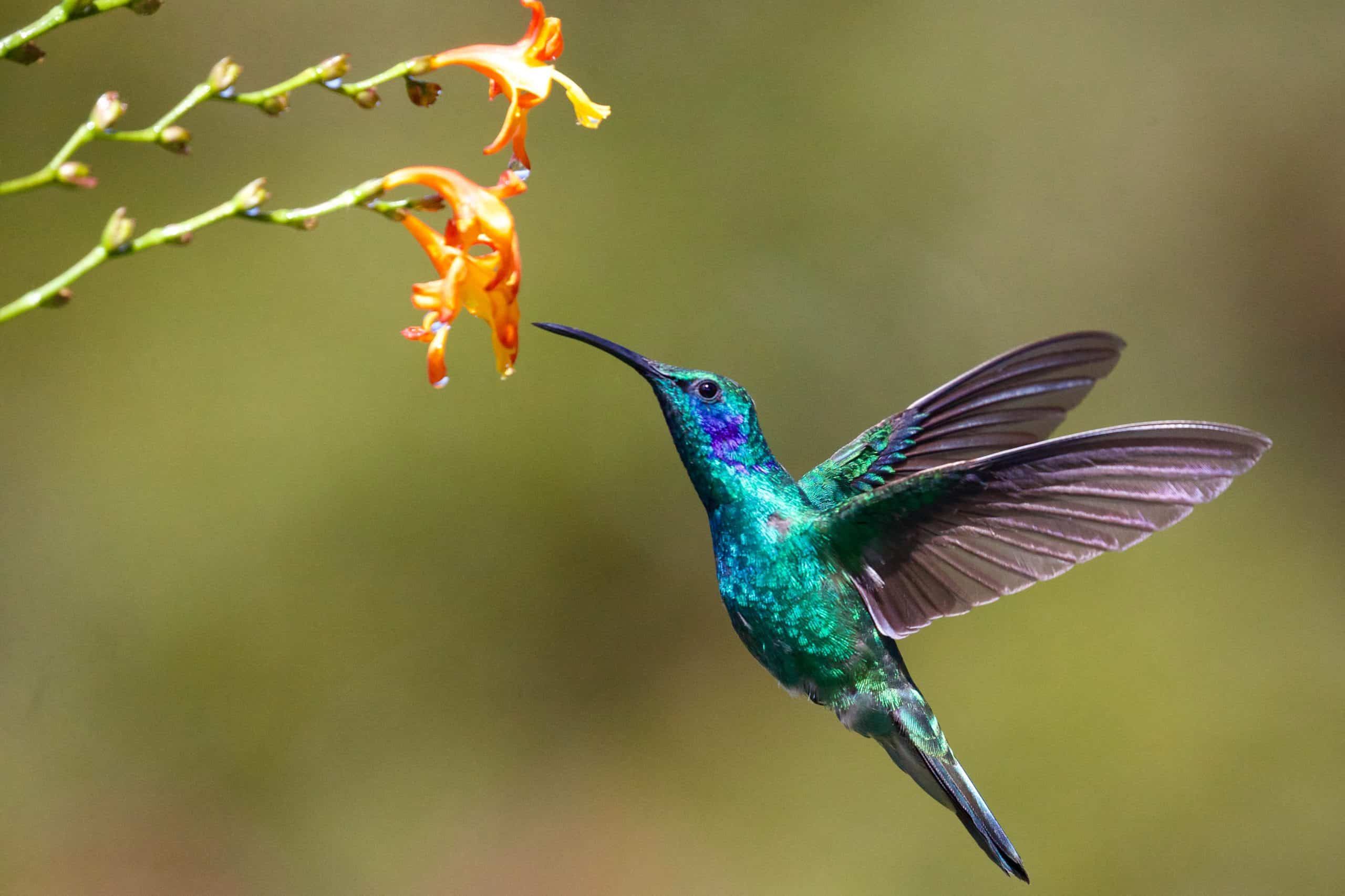 Interesting Facts About Hummingbirds
