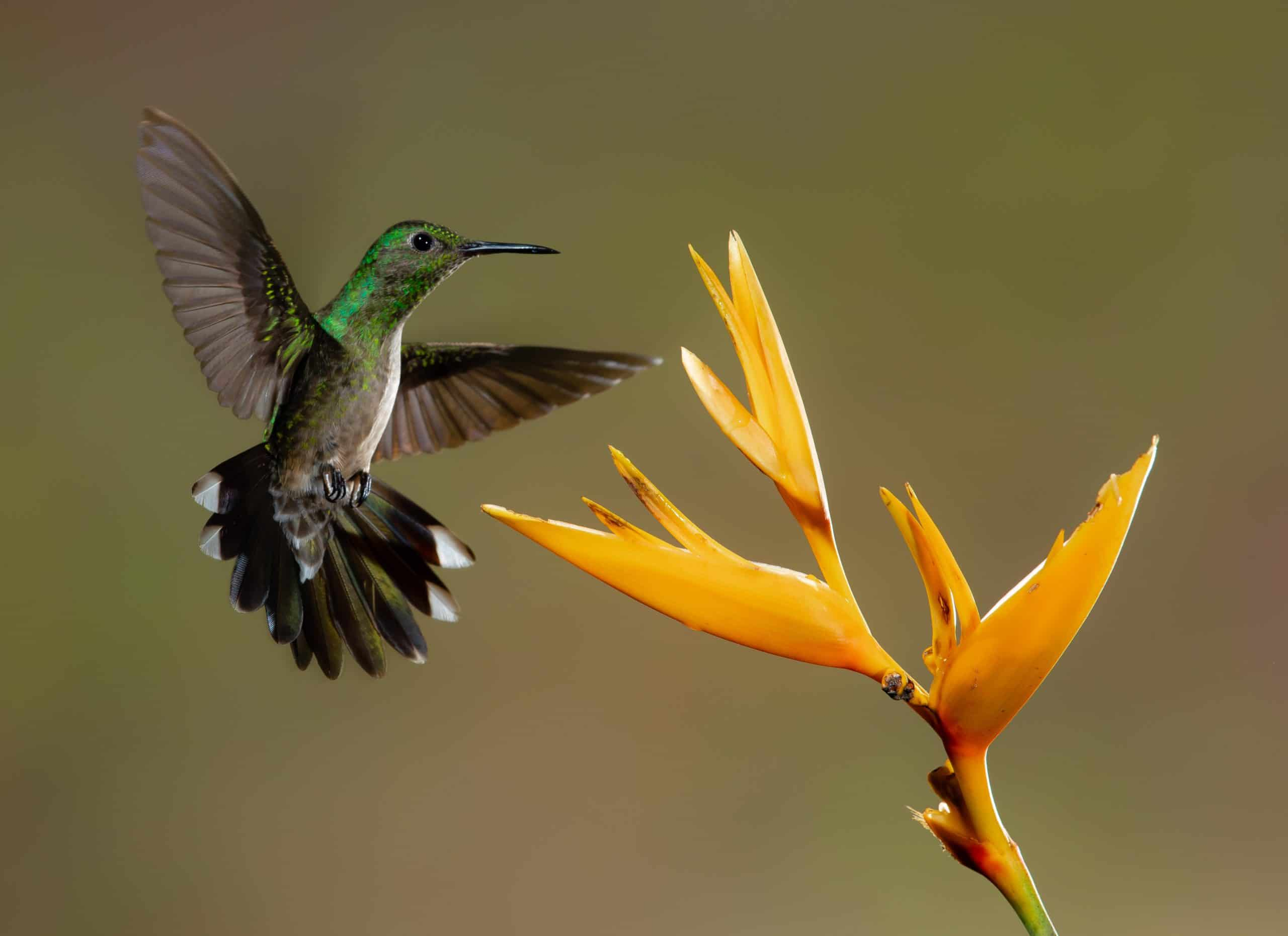 Learn About Bird Species: The Popular Species