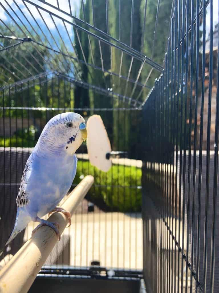 Keeping Your Birdcage In The Best Shape