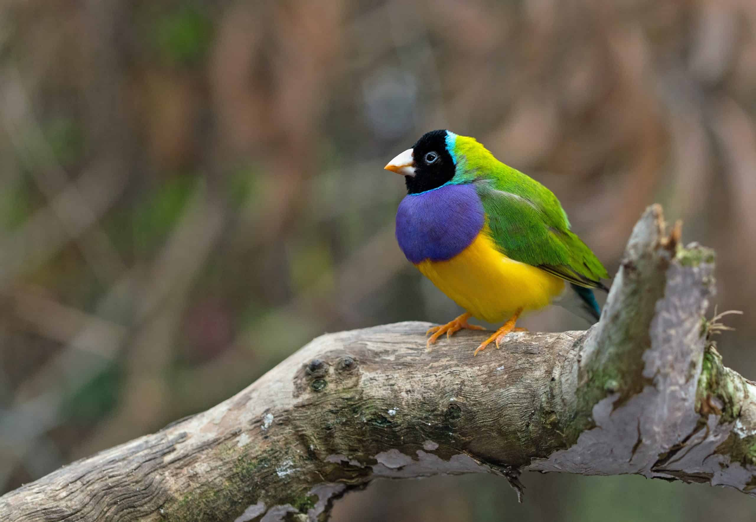 What Are Some Good Rare Birds To Collect?