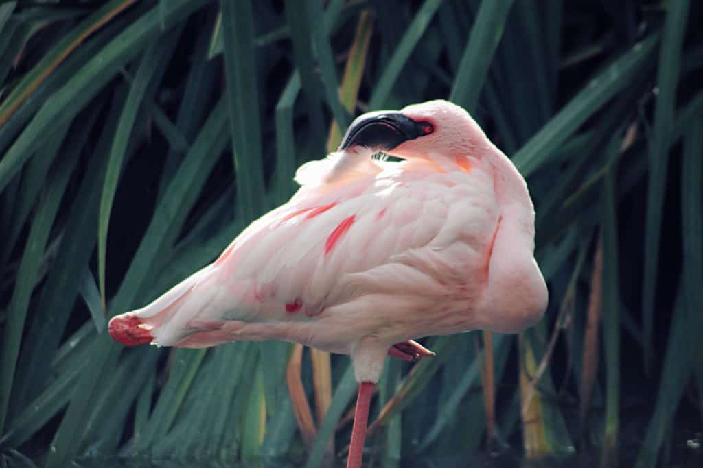 Top Beautiful Birds: Attract Them With Simple Things