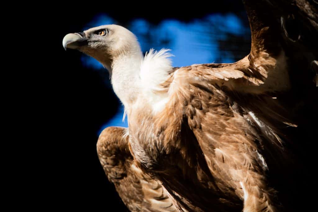 The Biggest Bird On Earth That You May See Once!