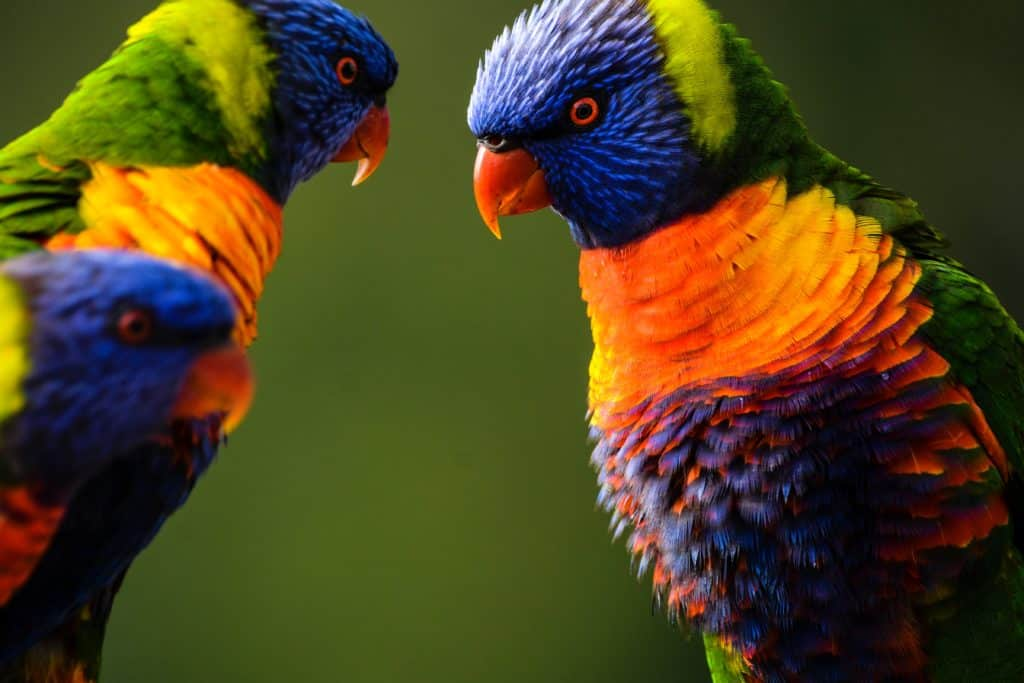 What Makes Birds Intelligent: Know More