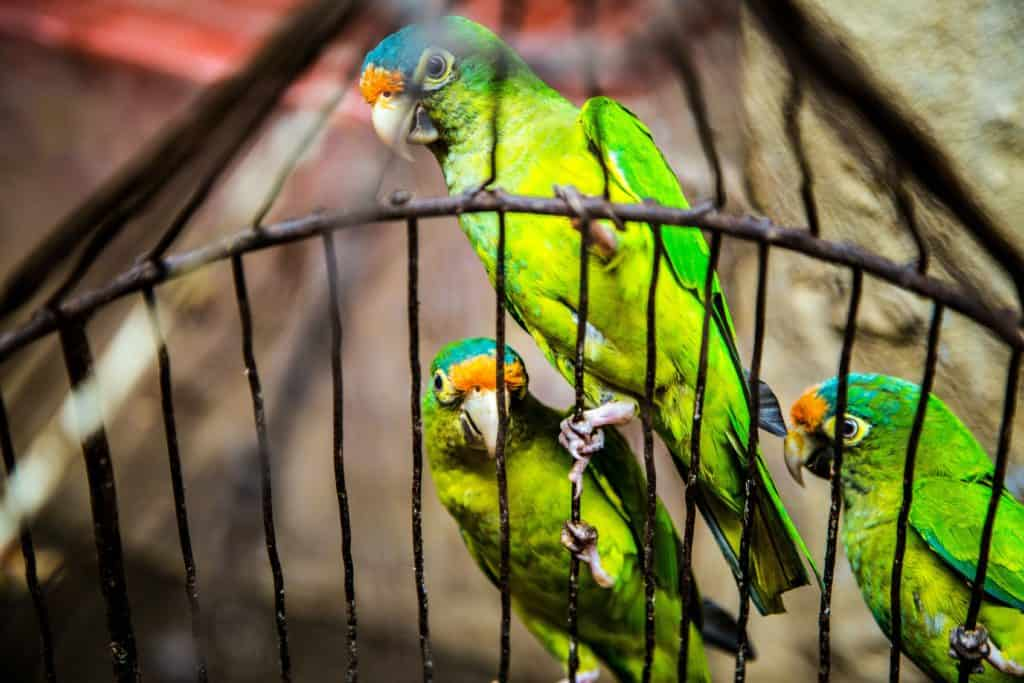 A Large Birdcage: The Secrets In Choosing