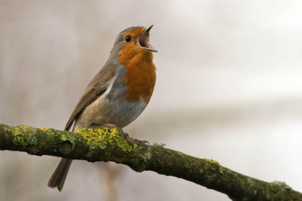 Facts About Birds That You Should Know
