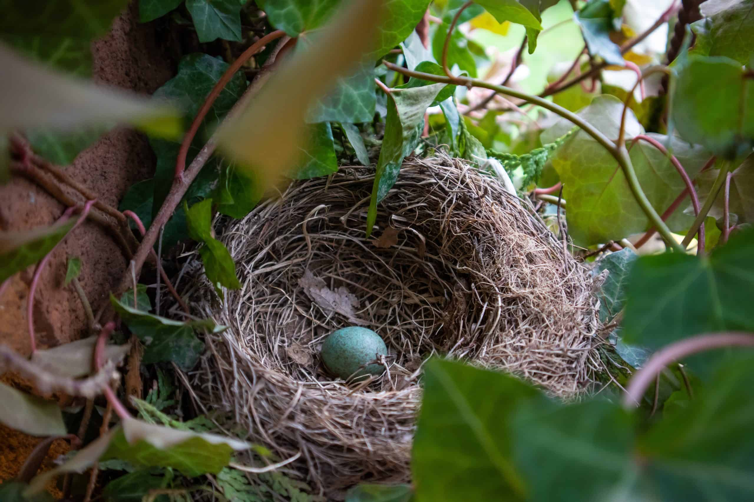 Adopt Love Birds Eggs Care - 6 Tips You Need To Know