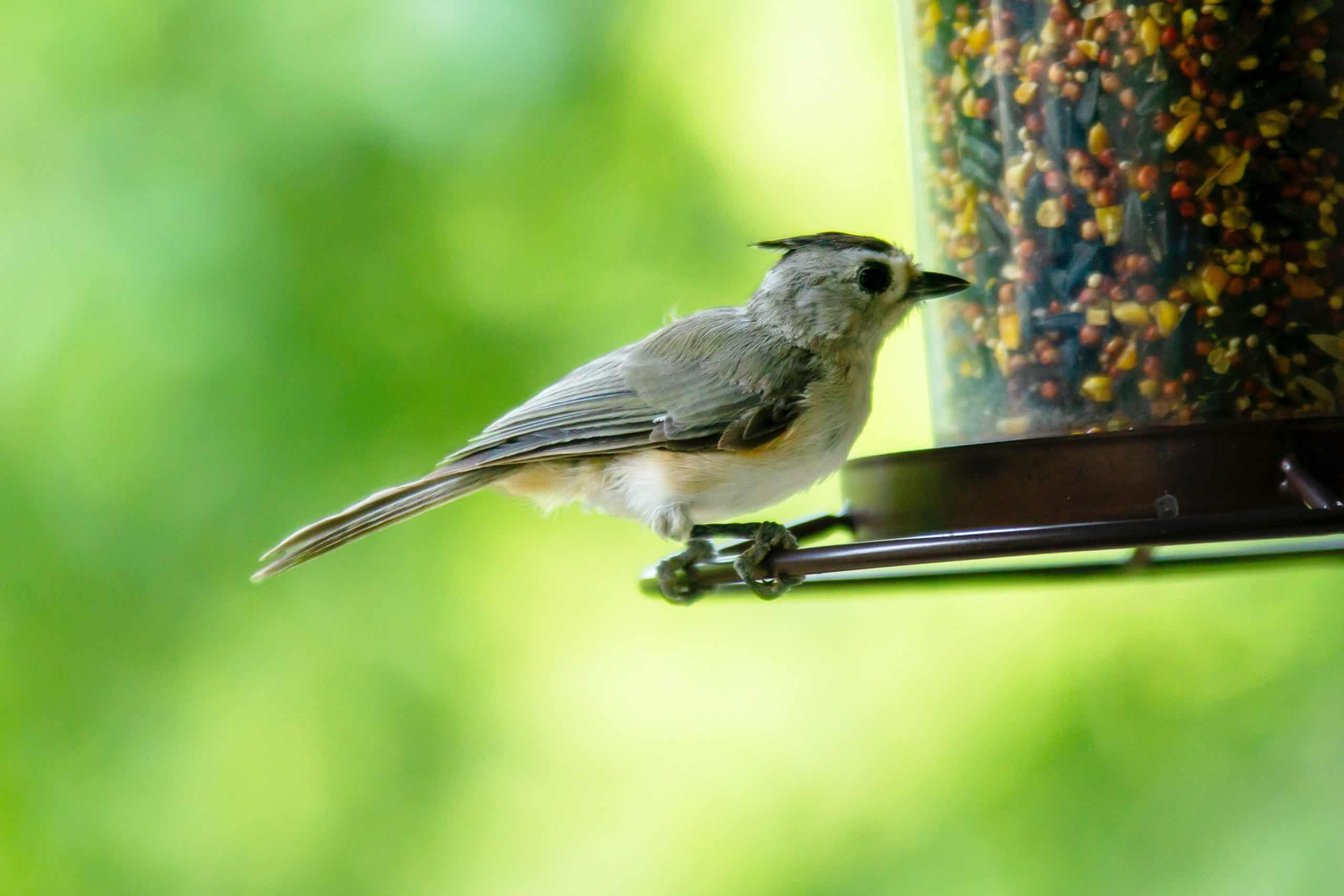Bird Feeders - The Best Types Of Bird Feeders