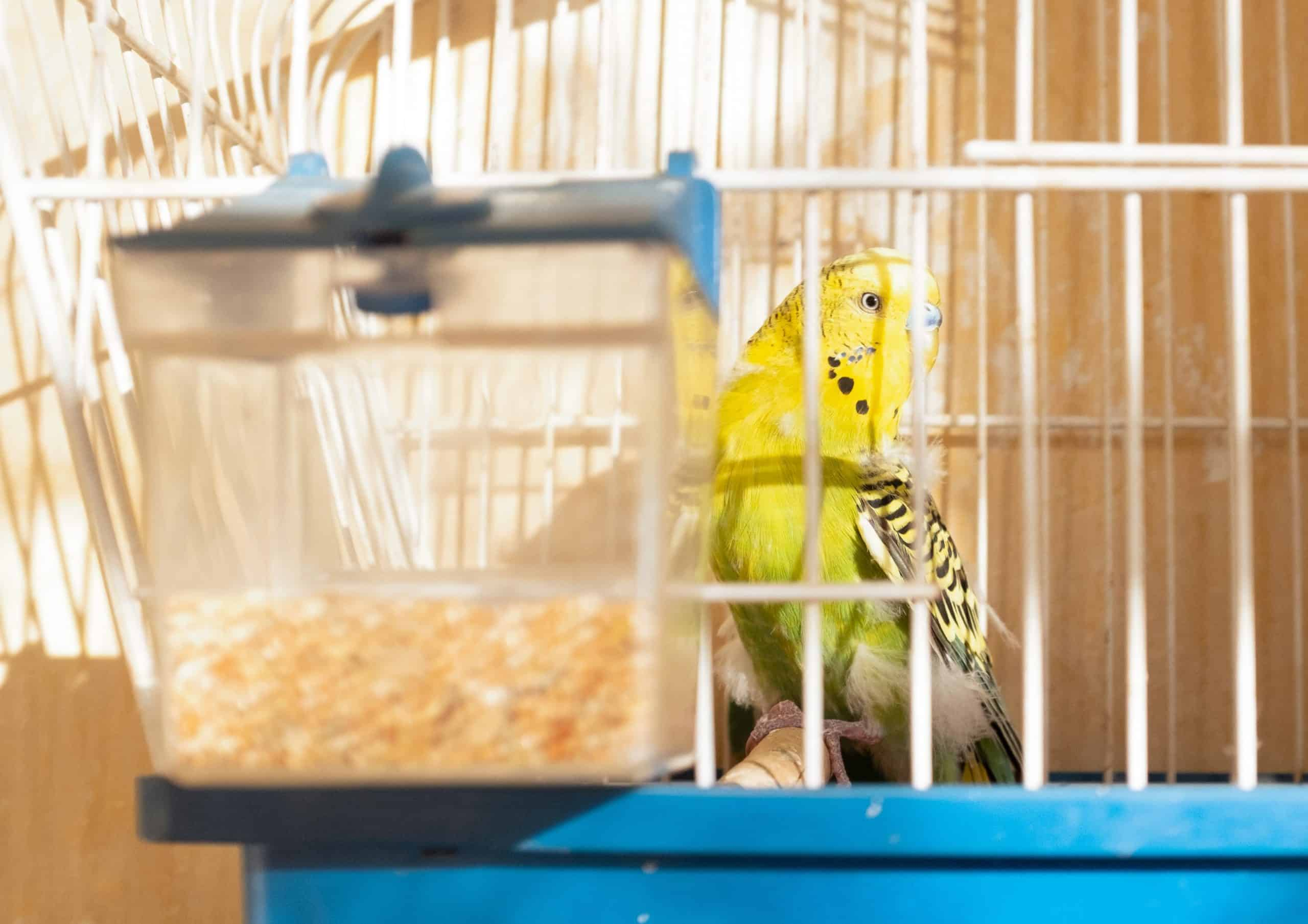 Secretive Tips For Taking Care Of My Pet Bird