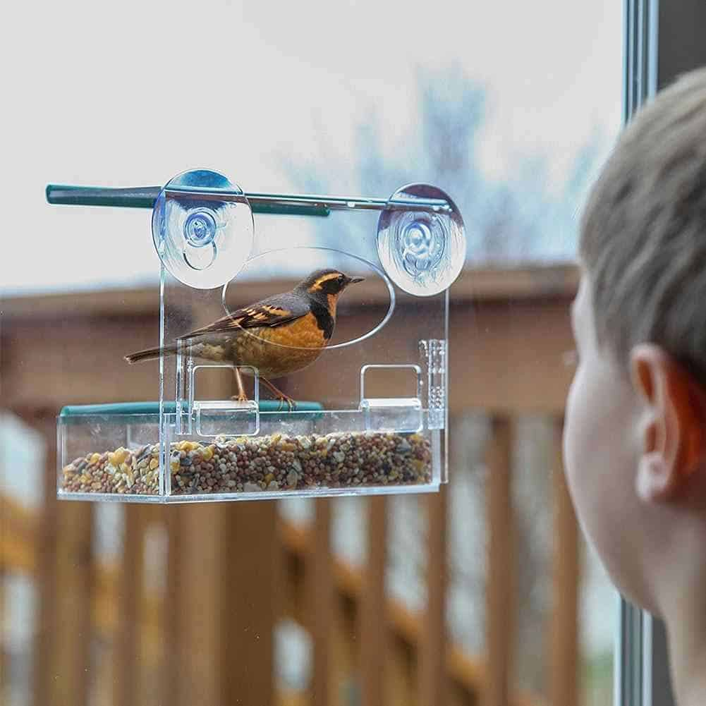 What Everyone Must Know About Window Bird Feeding