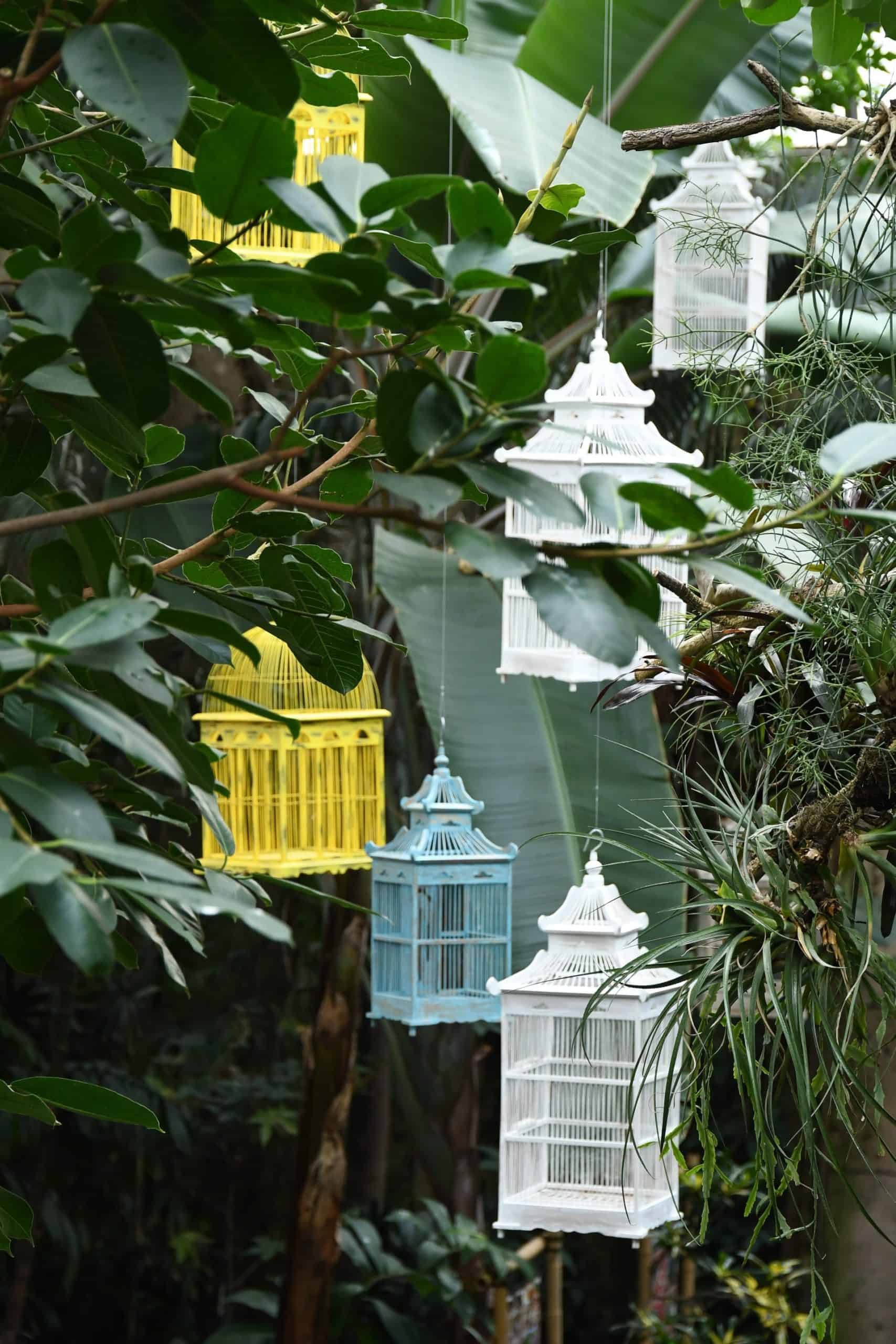 How To Choose The Best Birdcage Feeder For Your Pet