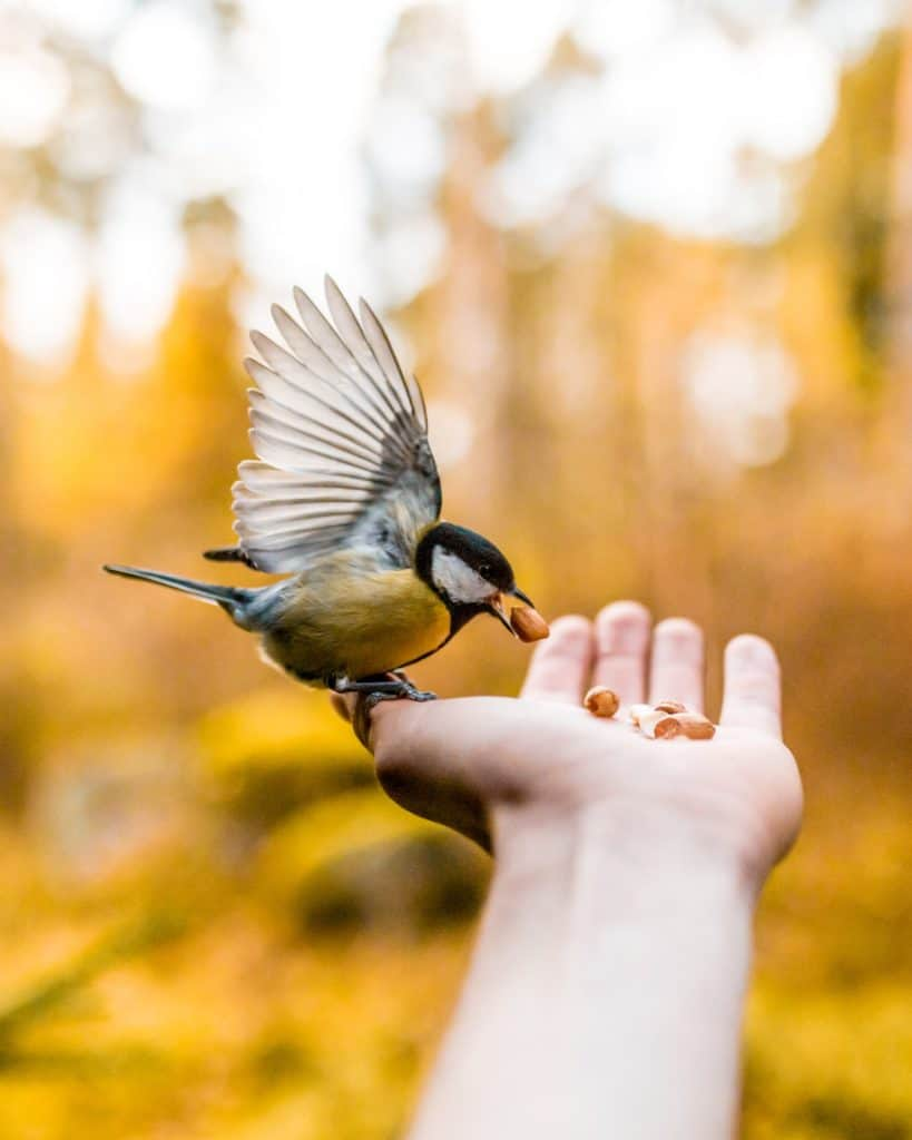 Some Interesting Facts about Birds That Is Going To Amaze You