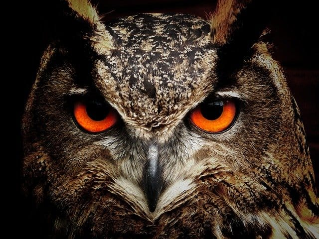A close up of an owl