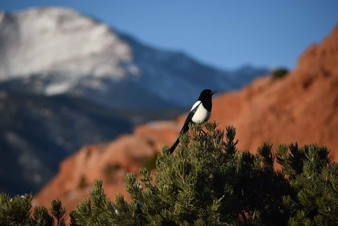 A close up of a bird perched on top of a mountain